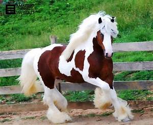 The most beautiful horse breed in the world – Poison5