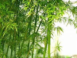 Images Of Bamboo Leaves Wallpaper Golfclub