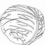 Cabbage Coloring Patch Getdrawings sketch template