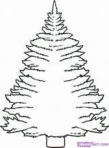 Tree Draw Pine Step Trees Coloring Drawing Drawings Pages Cartoon Colouring Clipart Drawn Printable Clipartmag Print Eastern Popular Chrismas Coloringhome sketch template