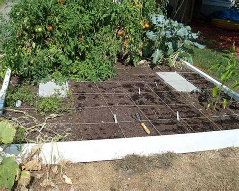 fall vegetable garden fall vegetable garden vegetables to grow during fall