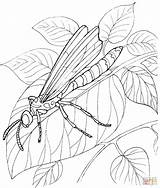 Dragonfly Coloring Pages Insect Stands Leave Printable Colouring Request Sheets Leaf Clipart Adults Insects Drawing Silhouettes Coloringpages101 sketch template