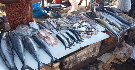 indian seas safe change    eat fish