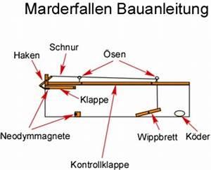 Holzunterstand Selber Bauen : marderfallen bauanleitung mit bauplan frag den ~ Udekor.club Haus und Dekorationen
