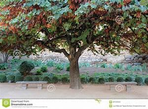 Baum Der Liebe : cercis siliquastrum baum der liebe stockfoto bild von garten rest 23723444 ~ Eleganceandgraceweddings.com Haus und Dekorationen