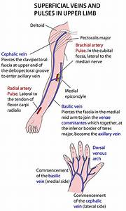 Instant Anatomy - Upper Limb - Vessels - Veins