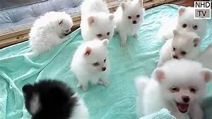 Cutes dogs   Cutest dog in the world   Cute dogs clips ...  Cutest