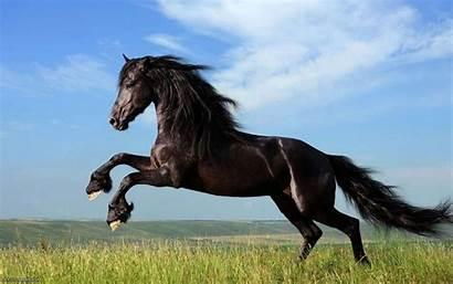 Horse Dark Animals Desktop Wallpapers Backgrounds Mobile