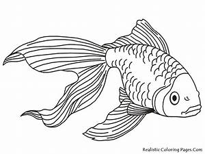 Goldfish Coloring Pages | Realistic Coloring Pages