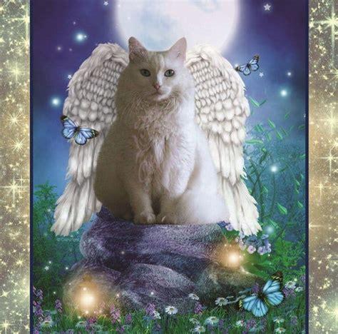 celestial whiskers cat calendar