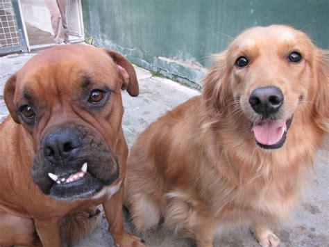 myths  pet quarantine petrelocation