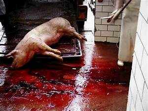 animal kill counter - Occupy for Animals!