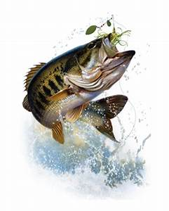 bass fish jumping - Google Search | FISH TO DO | Pinterest ...