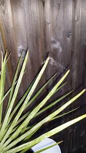 Palmen Für Draußen : spinnweben an palmen drau en seite 1 palmen ~ Michelbontemps.com Haus und Dekorationen