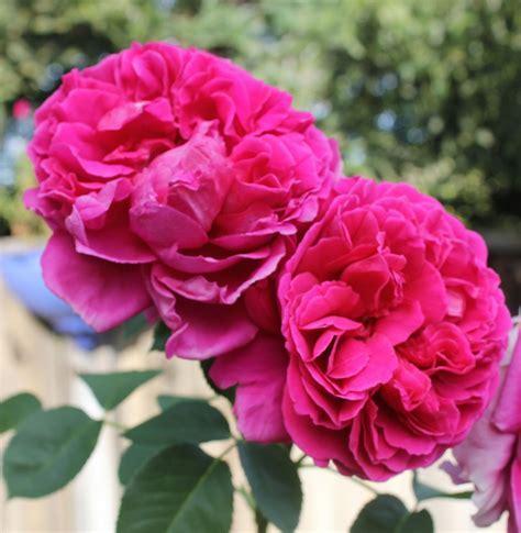 Festive Flowers for Cinco de Mayo ? Fancy Casual