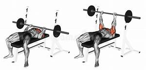 Exercising. Close-Grip Barbell Bench Press Stock ...