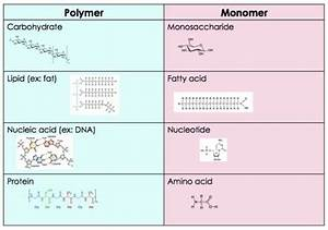 Role And Importance Of Monomers And Polymers