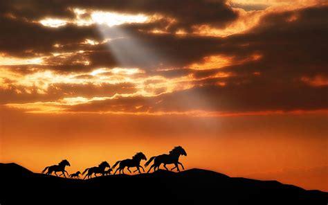 ray  hope   black horses hd animals