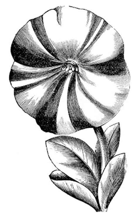 vintage floral clip art petunias  graphics fairy
