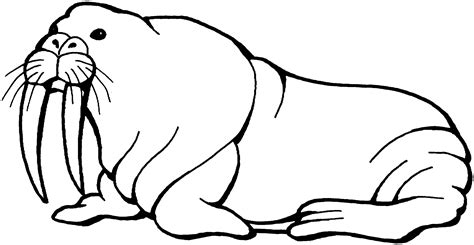 seal clipart black and white best walrus clipart 14044 clipartion