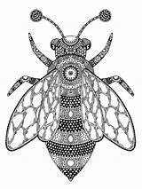 Coloring Fly Zentangle Adults Adult Mycoloring sketch template