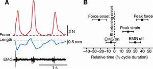 Modulation Of In Vivo Muscle Power Output During Swimming