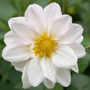NAMES OF WHITE FLOWERS - NAMES OF WHITE FLOWERS