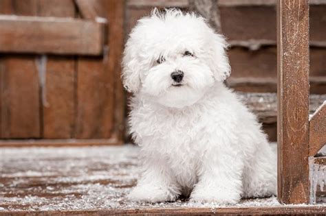 top  cleanest dog breeds