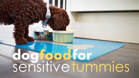 Best Dog Food For Sensitive Stomach (& Diarrhea)