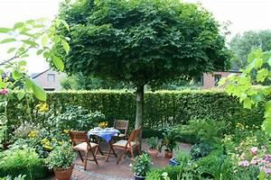 Schöne Bäume Für Garten : schattenspendende b ume f r den garten gartengestaltung ideen u die top b ume f r kleine g rten ~ Eleganceandgraceweddings.com Haus und Dekorationen