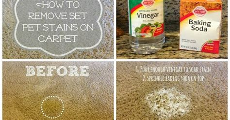 Sometimes, you might use a stain remover and get shoddy results. Little Brags: How To Get Rid Of Pet Stains On Carpet