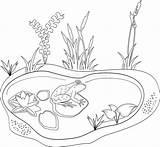 Pond Coloring Frog Clipart Colorare Rana Stagno Animals Illustrazione Lake Animal Coloration Farbton Vettoriale Learning Sketch Roseau Grenouille Frosch Teich sketch template
