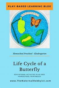 Life Cycle Of A Butterfly Unit Plus A Free Activity Guide