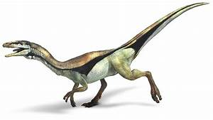 Compsognathus | Extinct Animals