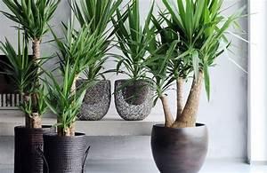 Plante De Salon : lutter contre l 39 hiver humide de barcelone ~ Teatrodelosmanantiales.com Idées de Décoration