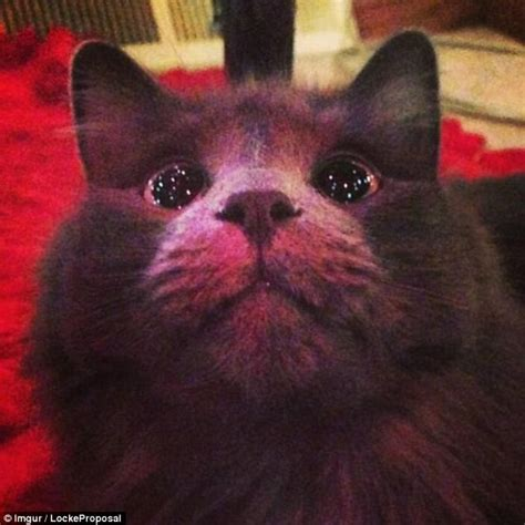 cat first seen christmas tree animals the funniest reactions daily mail