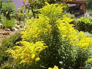 Plantes Fleurs Jaunes Vivaces
