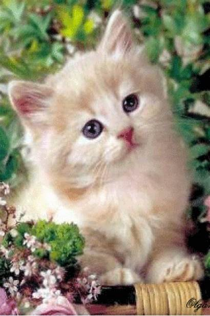 Kittens Fluffy Cats Cat Funny Cutest Cool