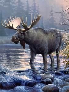 Top 78 Moose Wallpaper - HD Animal Spot