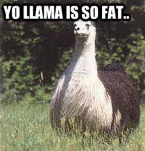 Llama Meme - funny llama pictures