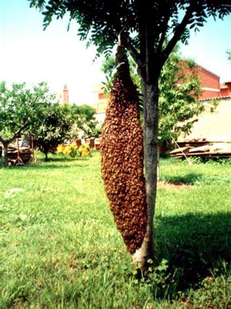 il miele Aringo eu