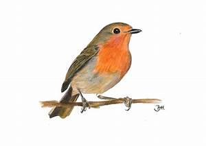 Vogel Mit Roter Brust : einheimische singv gel jagdbildungszentrum bayern ~ Eleganceandgraceweddings.com Haus und Dekorationen