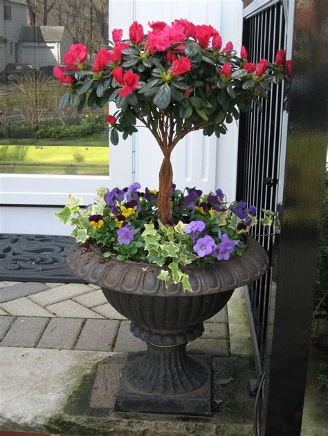planting azaleas in pots best 25 azaleas landscaping ideas only on weeds vinegar organic gardening tips and