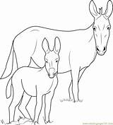 Donkey Coloring Pages Head Template Printable Coloringpages101 Pdf Sketch sketch template