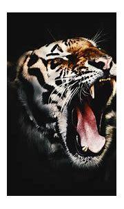 Download Free HD Wicked Tiger Desktop Wallpaper In 4K ...0287