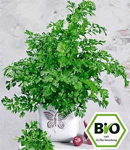 Winterharte Pflanzen Liste : baldur pflanzen kissen seifenkraut 1a pflanzen kaufen ~ Michelbontemps.com Haus und Dekorationen