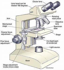 Microscope Diagram Crossword Answers