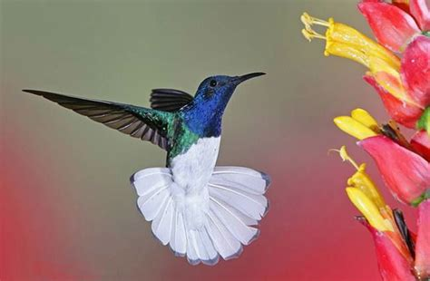 Colorful Hummingbirds And Flowers