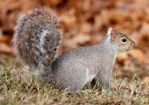 17 best ideas about what do squirrels eat on pinterest