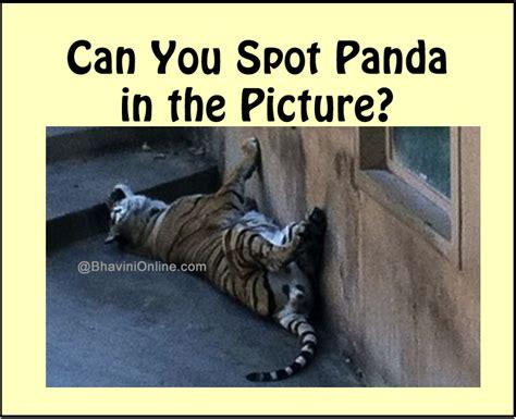 fun picture riddle   spot  panda   photo